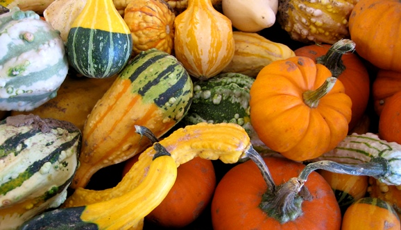 Decorative-Pumpkins-and-Gourds