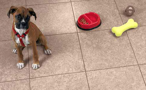pet-friendly_floors_500x310